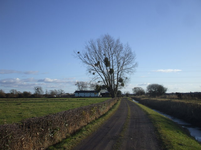 Track to Grangefield Farm