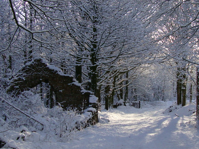 Snow in woods, Brinscall