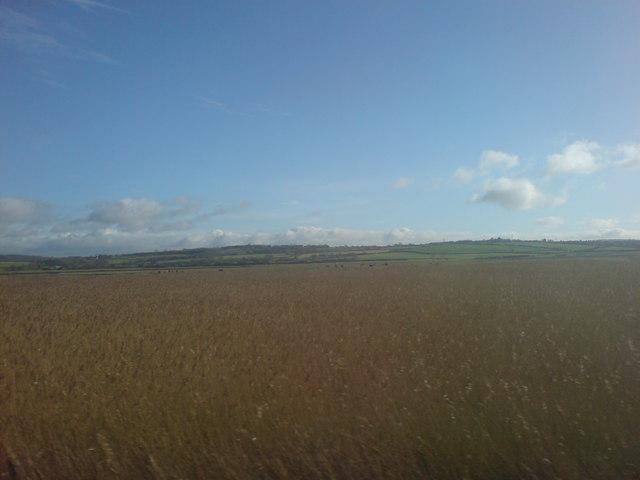Marshland and grass