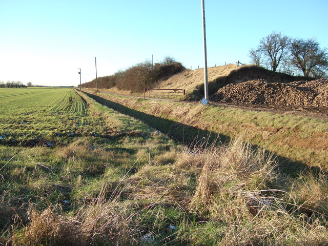 Sugar beet heap at Sharpe's Bank
