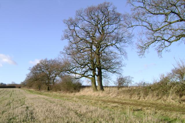 Gap-filled parish boundary hedge