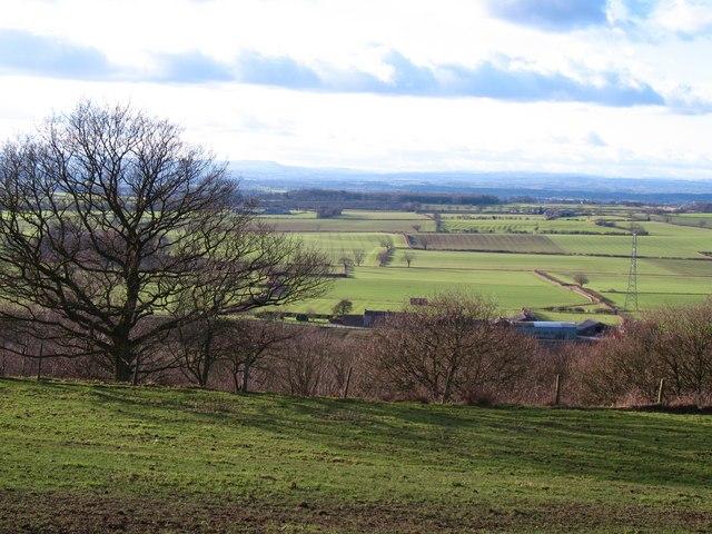 Hillside at Landmoth