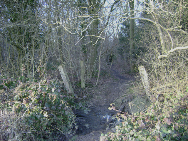 A path into South Cubbington Wood