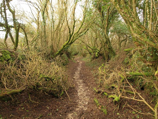 Footpath to Breney Common