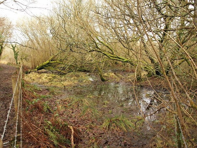 Marshy woodland,  Breney Common