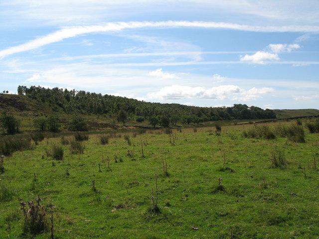 Lonborough Plantation