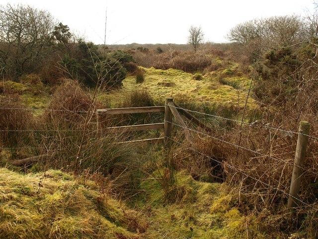 Breney Common