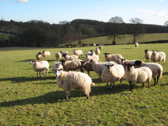 Sheep at Berrow Green