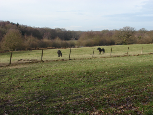 View towards Sheets Heath