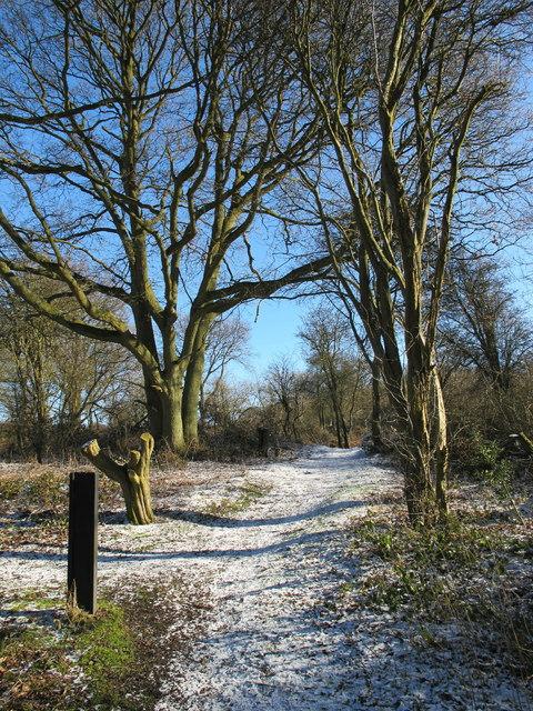 Aston Wood in light snow