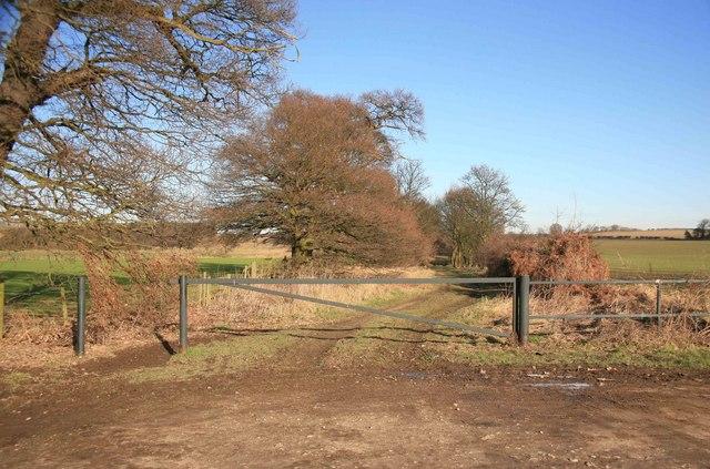 Farm track nr Serlby