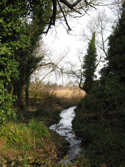 Stream feeding Fleet Pond