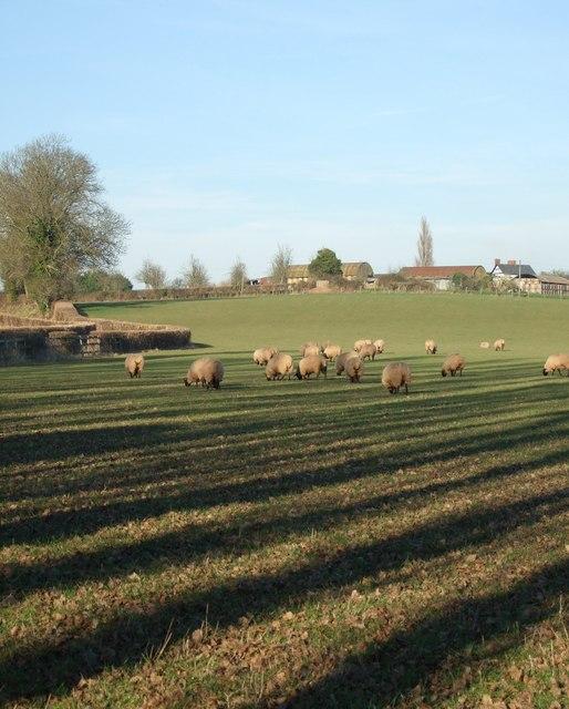 View of Preston Wynne farm