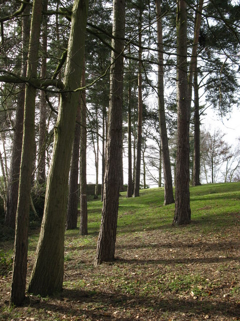 Small area of woodland at Longmead
