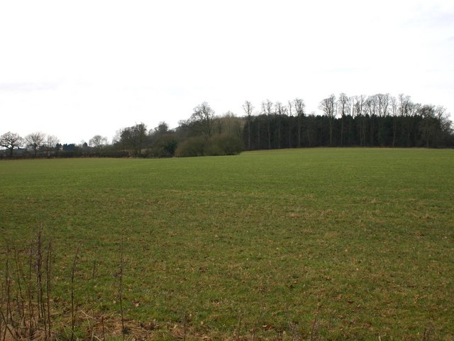 Coplow Wood and Church Farm Spinney