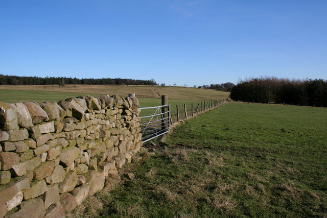 Wall and Fence