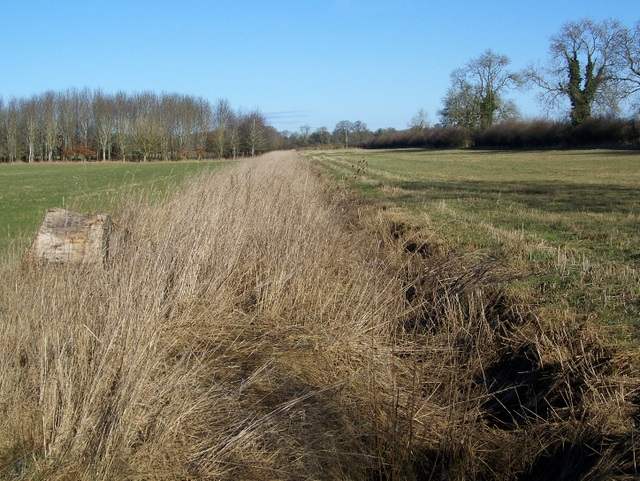 Field boundary near Barnsley