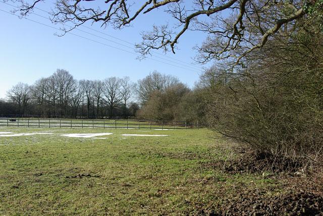 Field edge, near Little Brook Farm