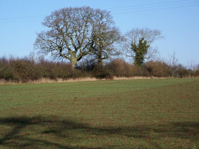 Arable land near Barnsley