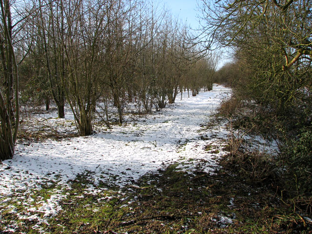 Unmarked woodland west of Green Lane