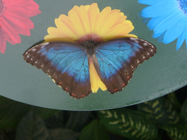 Butterflies in the Glasshouse