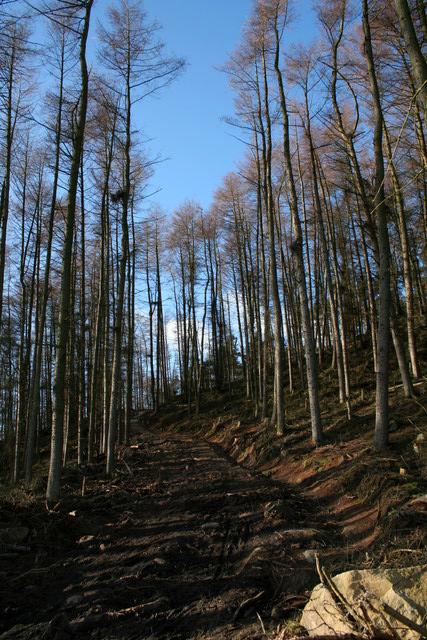 Steep Track, Norwood Edge Plantation