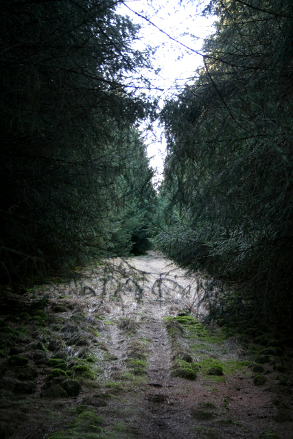 Track in the Forest