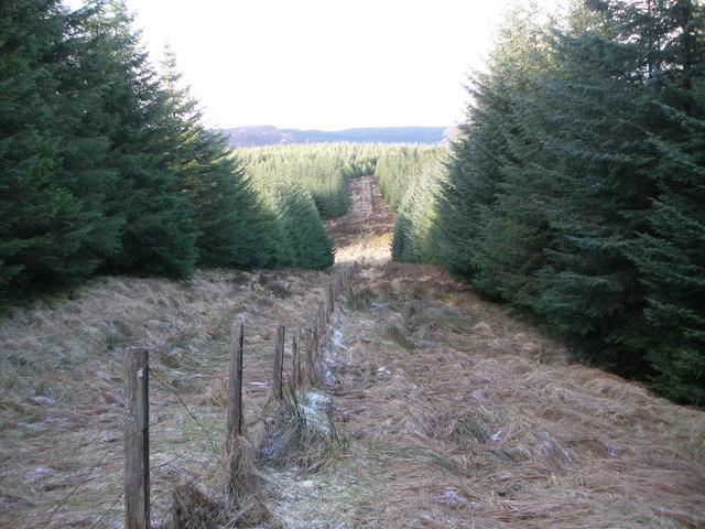 Firebreak and fence line below Cnocan Sgeir'e