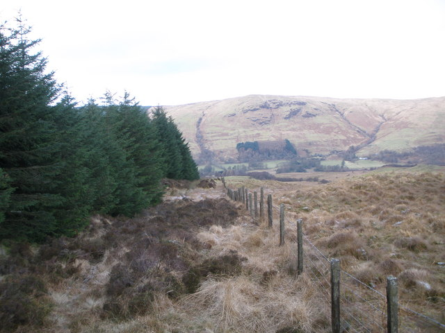 Edge of Glendaruel Forest