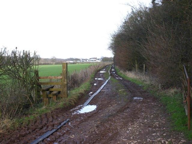 Footpath by Moreton Wood