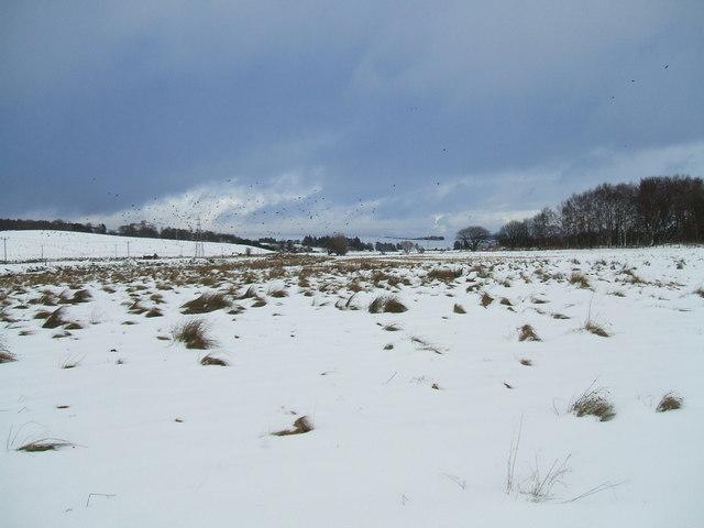 Field by the river Isla in winter