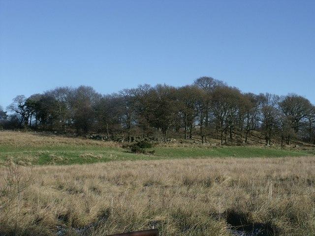Stand of  Wood near Banton