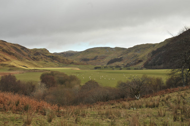 Sheep grazing near Turnalt
