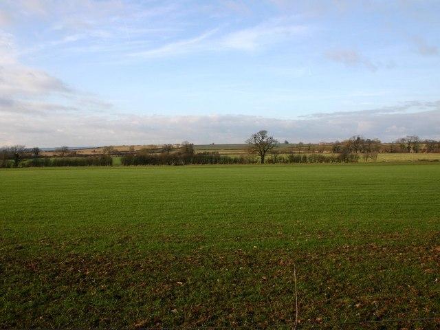 Fields Northwest of Moreton Wood