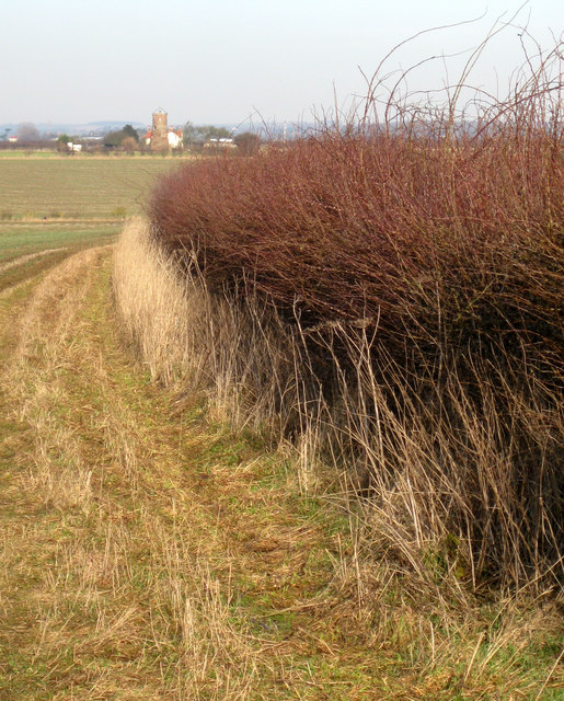 Hedgerow looking North