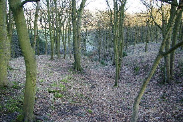 Buckden Wood