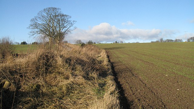 Winter cereal crop, Mains of Fowlis