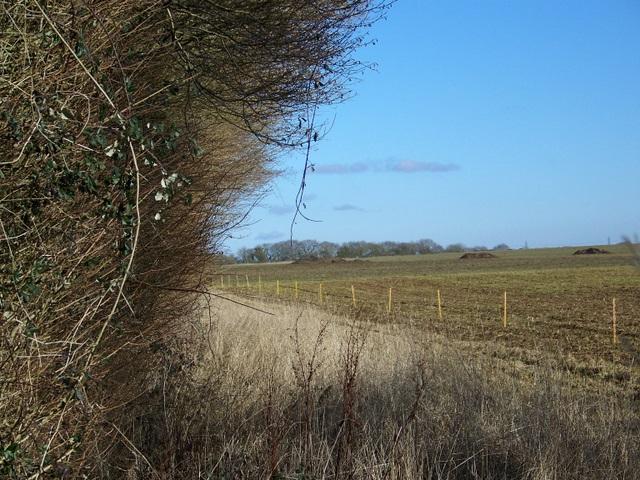 Arable land near Southrop