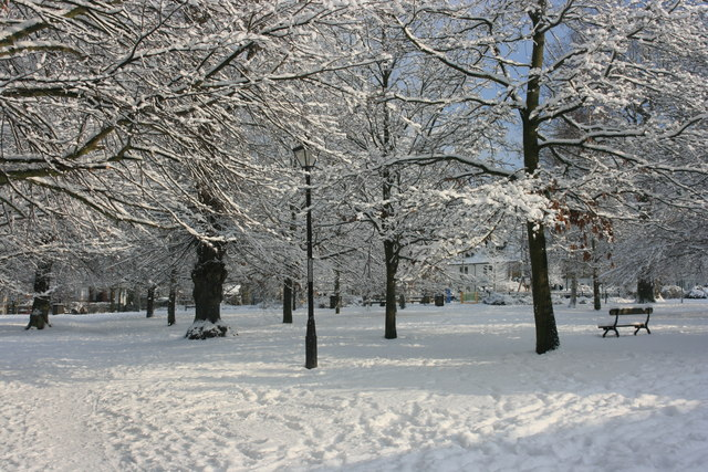 The Grove in the snow
