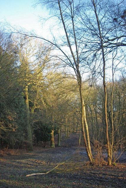 Path Through Tower Plantation