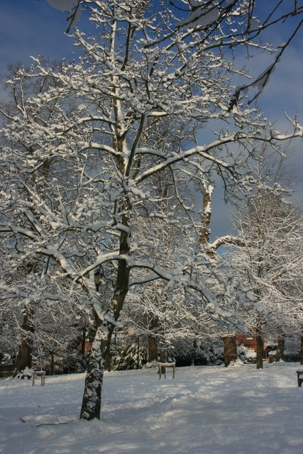 Snow covered tree, The Grove