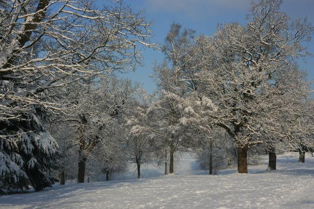 The Grove : snow scene