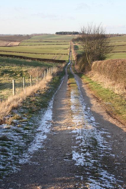 Track to Carr Banks Plantation