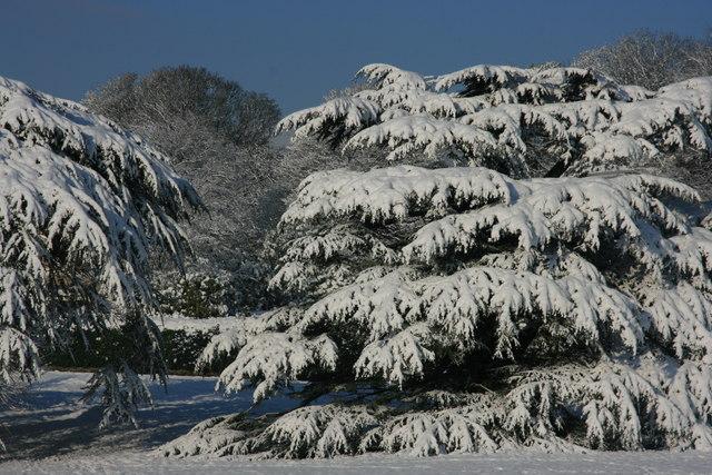 Snow covered tree, Calverley Park