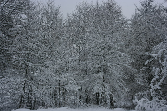 Snow covered trees, Reynolds Lane