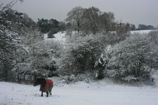 Horse, Smockham Farm