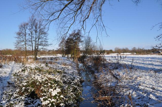 Loddon Marshes