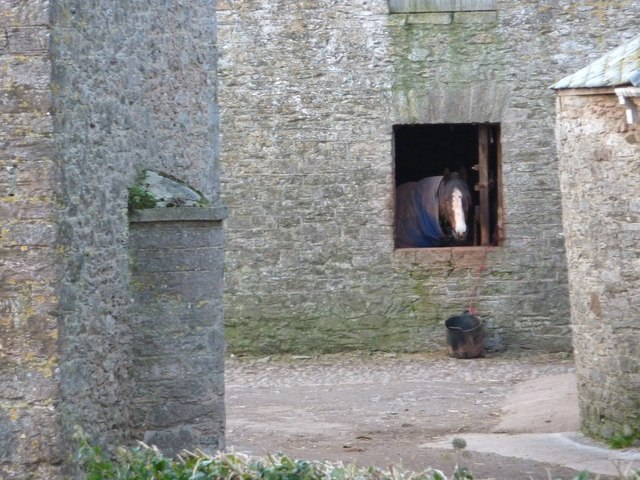 Horse in a stable, Elberry farm, Churston