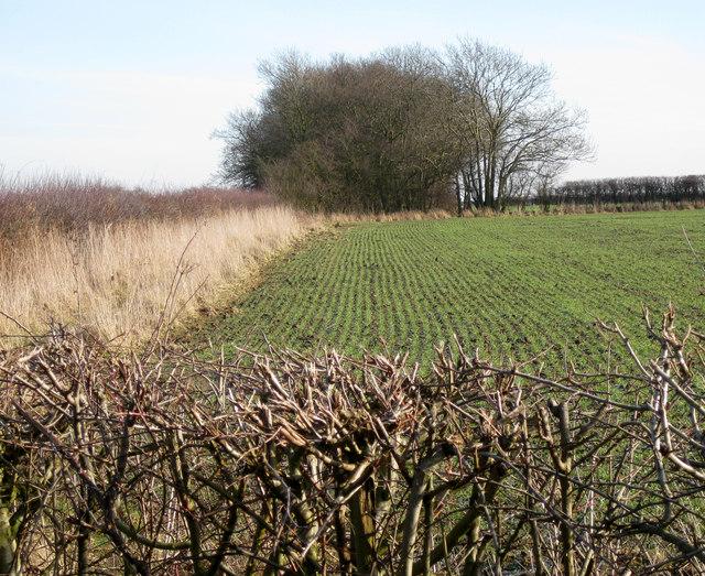 Highfield plantation