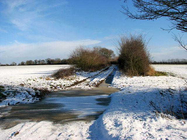 Hedge beside Highfield Lane
